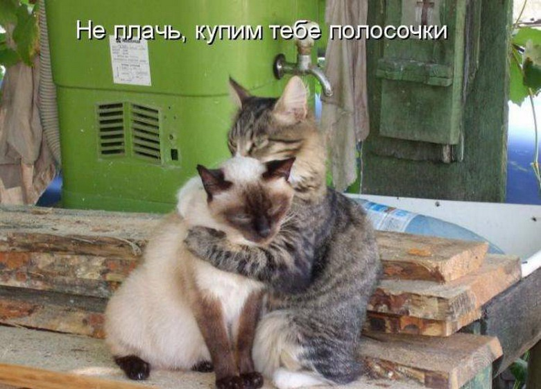 Кот жалеет картинки