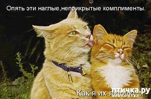 фото: Котоматрица: Коты и кошки!