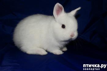 фото: Карликовые кролики
