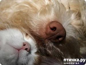 фото: Котоматрица на ночь: Как кошка с собакой! Часть 2.