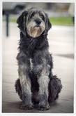 фото: Верил пёс...