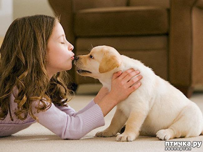 фото 1: Почему нужно завести именно собаку?