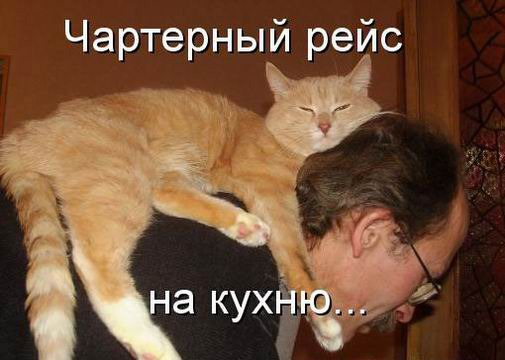 фото 1: Пятничная котоматрица: Приколы из жизни кошек!