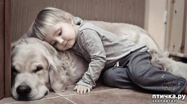 фото 2: Почему нужно завести именно собаку?