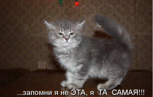 фото 2: Пятничная котоматрица: Приколы из жизни кошек!