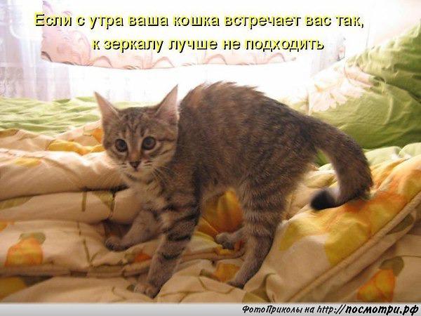 фото 3: Пятничная котоматрица: Приколы из жизни кошек!