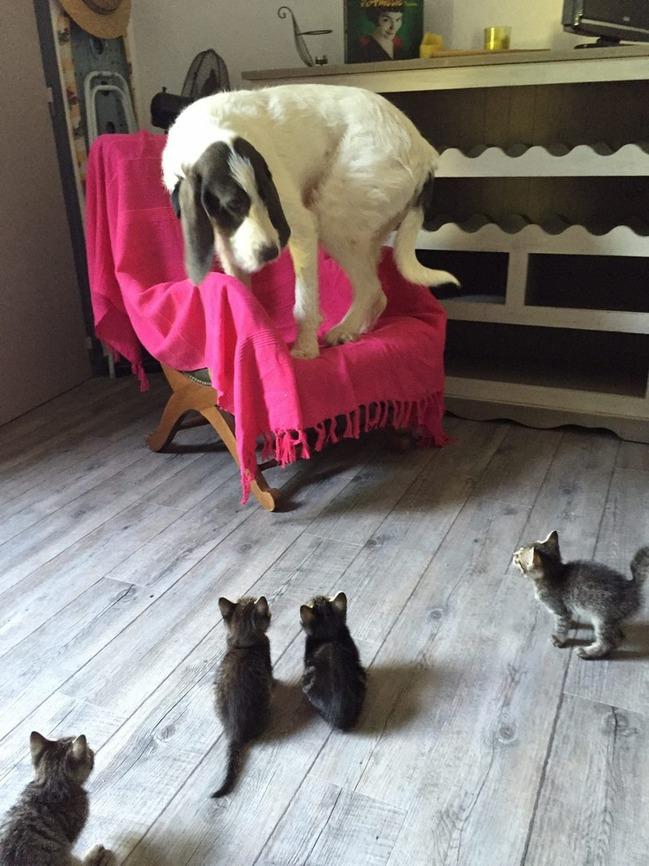 фото 6: Пятничная котоматрица: Приколы из жизни кошек!