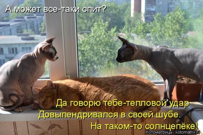 фото 8: Пятничная котоматрица: Приколы из жизни кошек!