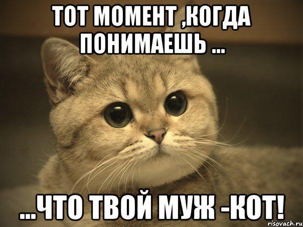 фото 5: Почему мой муж не кот?