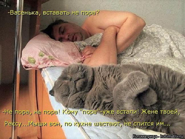 фото 7: Почему мой муж не кот?