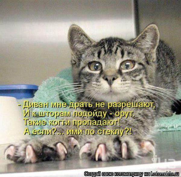фото 10: Пятничная котоматрица: Приколы из жизни кошек!