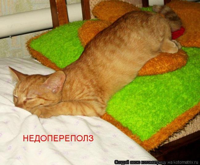фото 11: Пятничная котоматрица: Приколы из жизни кошек!