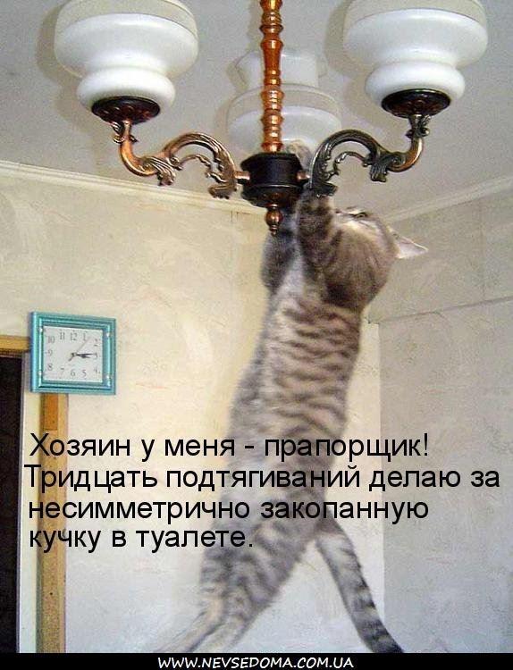 фото 13: Пятничная котоматрица: Приколы из жизни кошек!