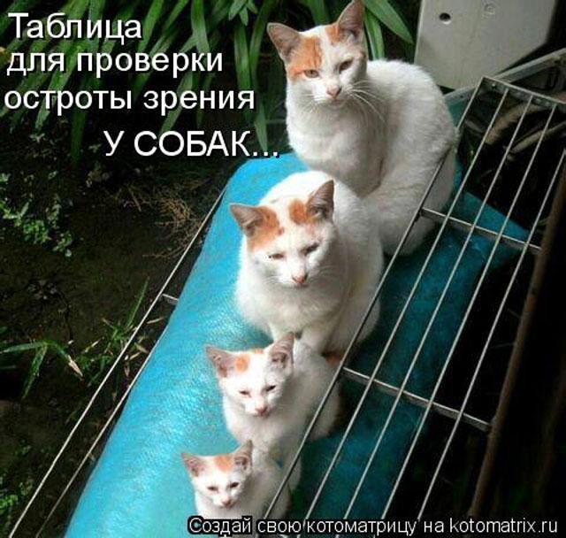 фото 14: Пятничная котоматрица: Приколы из жизни кошек!