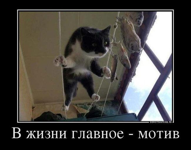 фото 15: Пятничная котоматрица: Приколы из жизни кошек!