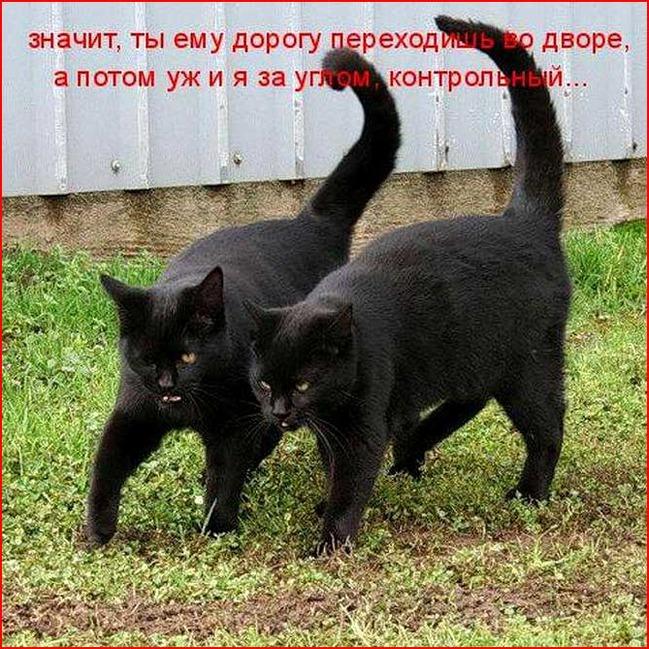 фото 16: Пятничная котоматрица: Приколы из жизни кошек!