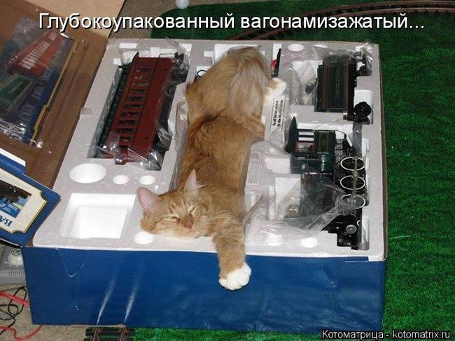 фото 17: Пятничная котоматрица: Приколы из жизни кошек!