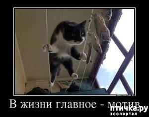 фото: Пятничная котоматрица: Приколы из жизни кошек!