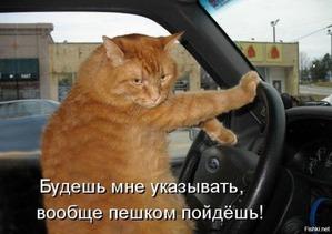 фото: Кошка и дорога - кто кого???