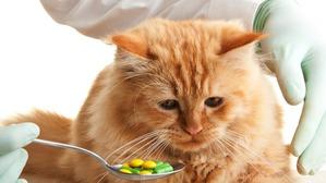 фото: Какие вы даете коту (кошке) витамины?