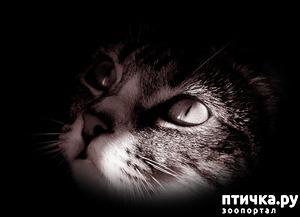 фото: Магия кошки