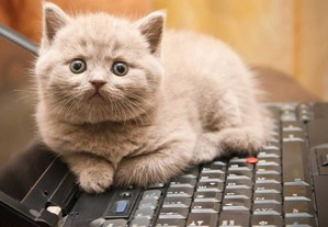 фото: Почему кошки так любят клавиатуру
