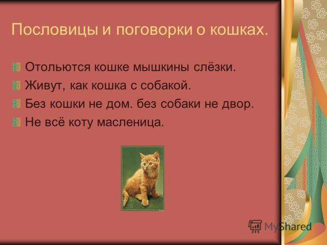 фото 1: А какие вы знаете высказывания о кошках?