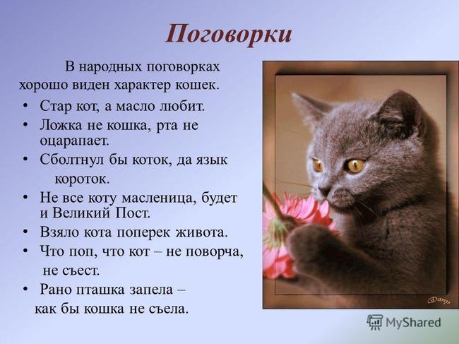фото 2: А какие вы знаете высказывания о кошках?