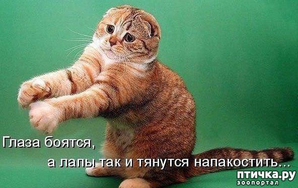 фото 4: А какие вы знаете высказывания о кошках?