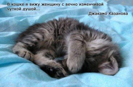 фото 5: А какие вы знаете высказывания о кошках?