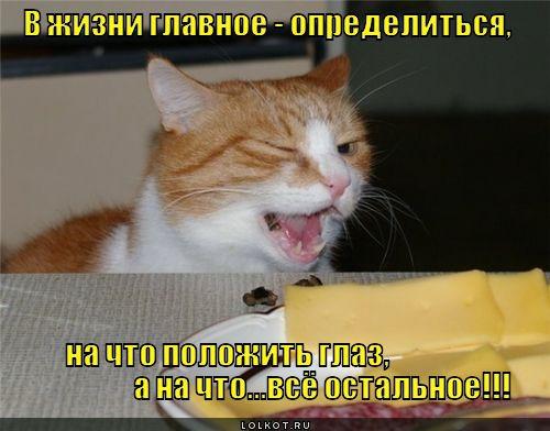 фото 4: Котоматрица: Ну что, посмеемся на ночь глядя???