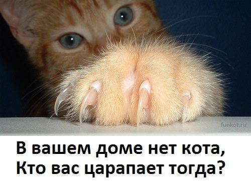 фото 6: А какие вы знаете высказывания о кошках?