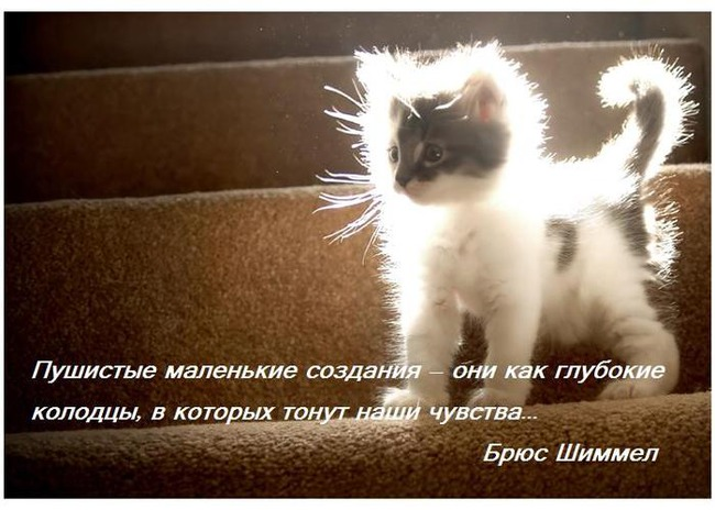 фото 7: А какие вы знаете высказывания о кошках?