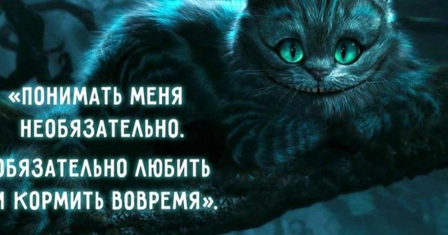 фото 9: А какие вы знаете высказывания о кошках?