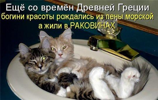 фото 7: Котоматрица: Ну что, посмеемся на ночь глядя???