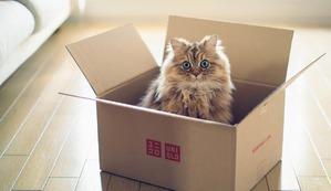 фото: Кошачья логика