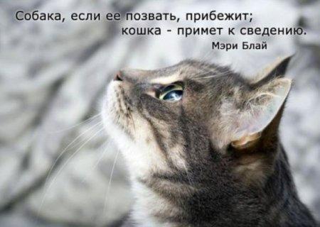фото 11: А какие вы знаете высказывания о кошках?