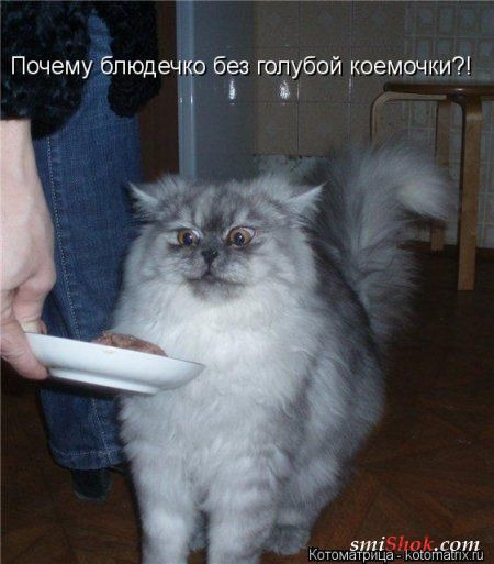 фото 12: Котоматрица: Ну что, посмеемся на ночь глядя???