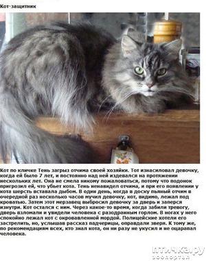 фото: Кошки-защитники (Фото)