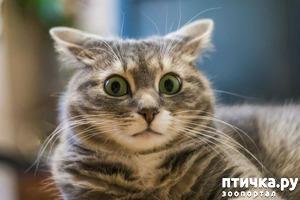 фото: 65 фактов о кошках