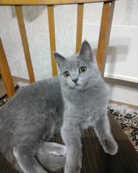 Марго, спасенная кошка