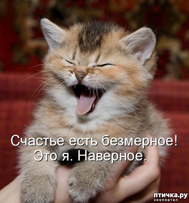 фото 1: Котята пушинки-смешинки.