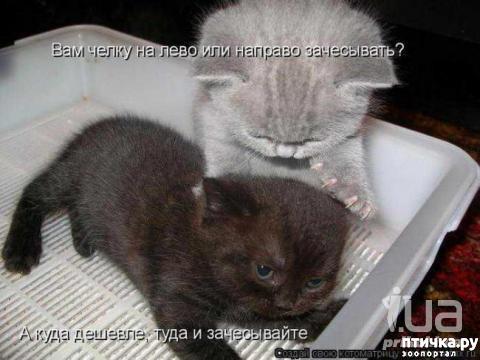 фото 2: Котята пушинки-смешинки.