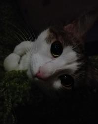 Полосёшка, дворовая кошка