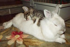 фото: Спать вдвоём удобнее