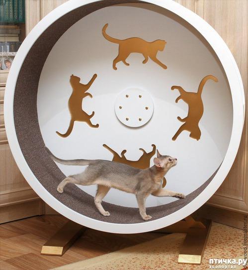фото 1: Беговое колесо