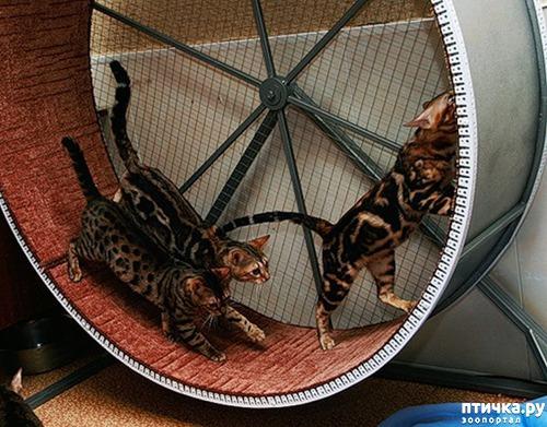 фото 2: Беговое колесо