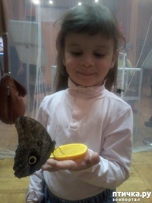 фото: Если на вас села бабочка - будете счастливы!