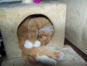 фото: Интересные позы кошек! Часть 2.