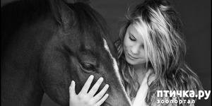 фото: Я обожаю лошадей!